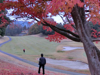 golf.991