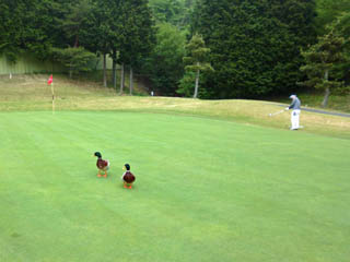 golf.a014
