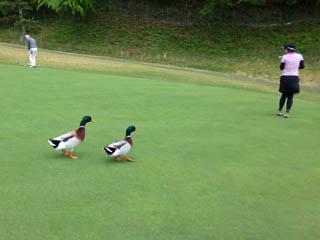 golf.a015